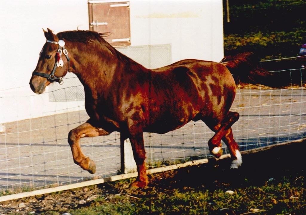 OPUS 1987